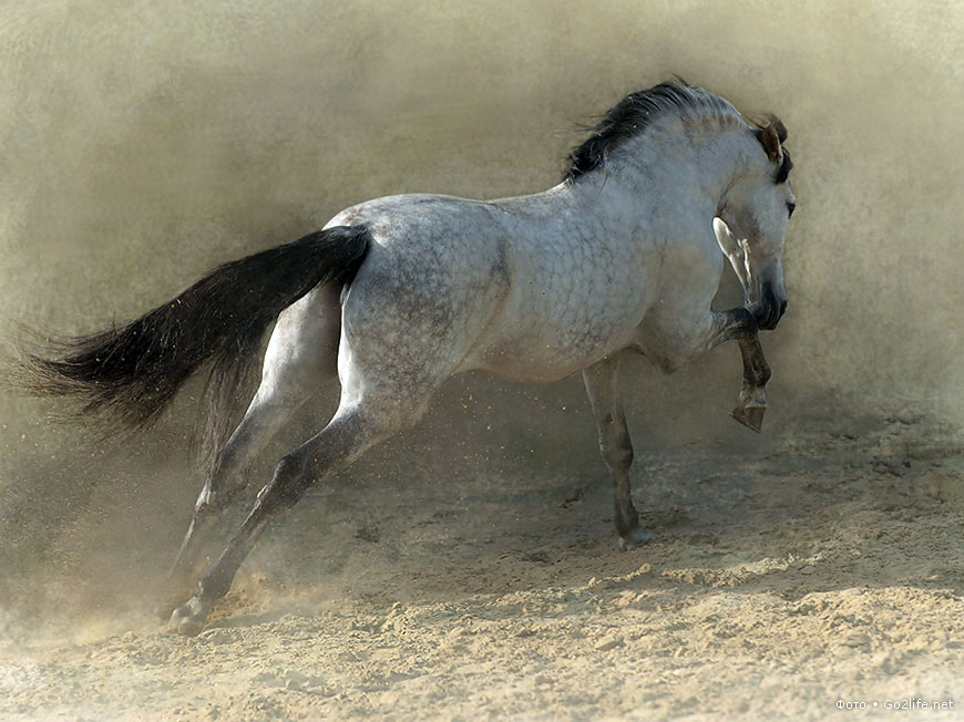 бракосочетание было картинка уходящей лошади данный тип