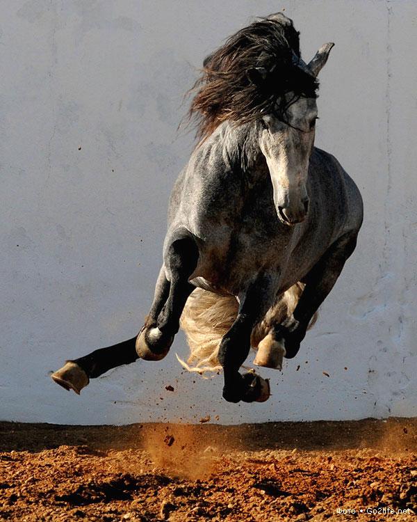 такие а кони все бегут картинки проверьте, может