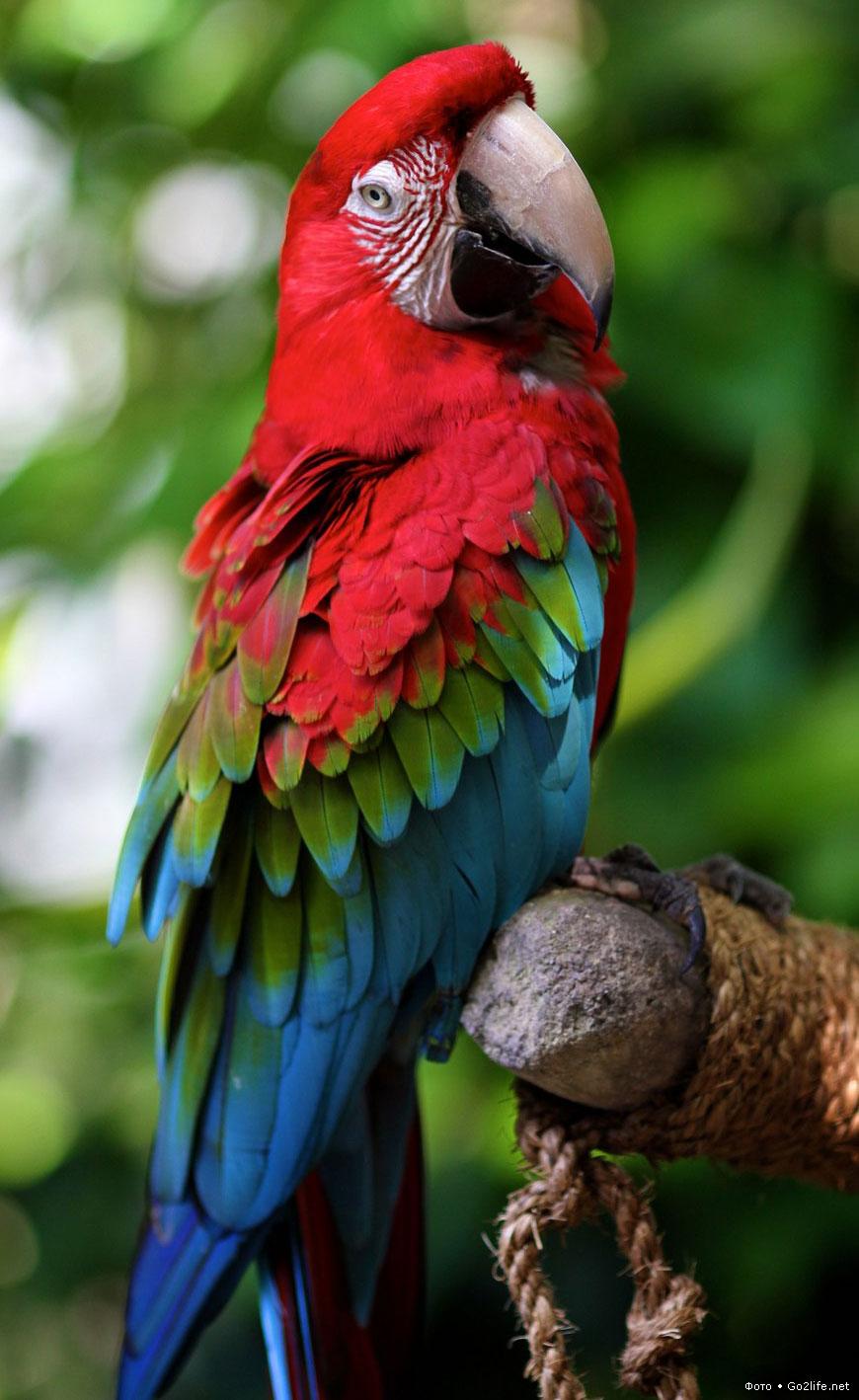 Картинки попугаев красивые, бумаги объемная