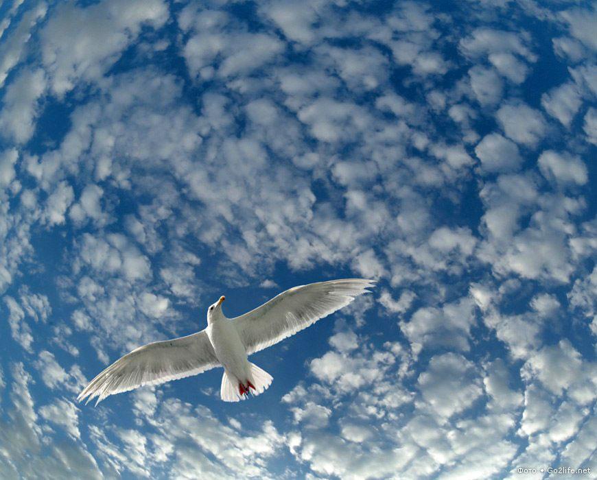Картинки анимации полет птиц, открытку фотографией днем