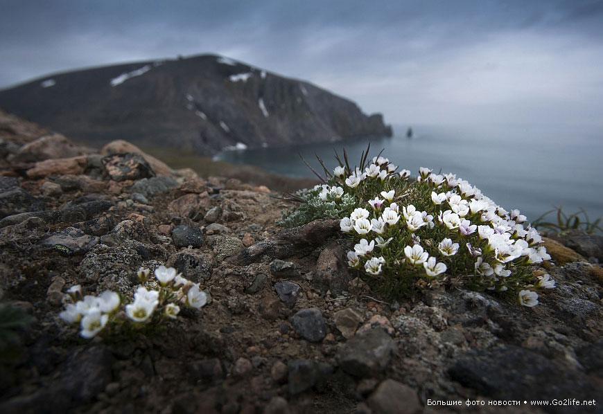 Цветы на севере россии, цветов спб роза