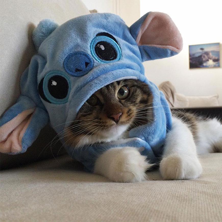 Котенка спасли хаски