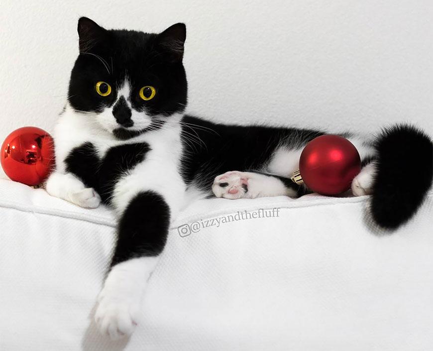 Миленькая кошка с сердечком на груди