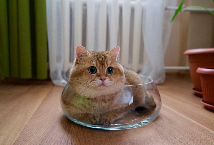 Хосико - настоящий кот в сапогах